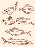 Set of vintage saltwater fish Stock Photo