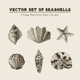 Set of  vintage seashells. Five illustrations of shells and starfish on a beige background Stock Photo