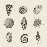 Set of  vintage seashells. Royalty Free Stock Photos