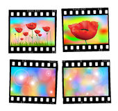 Set of vintage slides. Set of vintage poppies and sparcles slides Royalty Free Stock Photos