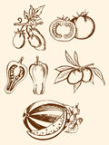 Set of vintage vegetable icons Royalty Free Stock Photos