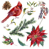 Set vintage watercolor Christmas elements of holly Royalty Free Stock Photo