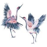 Set of watercolor red heads crane Stock Images