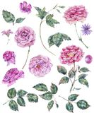 Set of vintage watercolor roses leaves, buds branches, flowers Royalty Free Stock Image