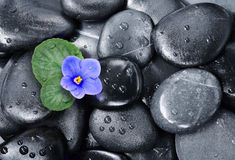 Set of violet flowers on pebble Royalty Free Stock Images
