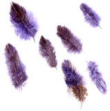 Set of violet plumes Stock Photos