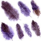 Set of violet plumes Royalty Free Stock Photos