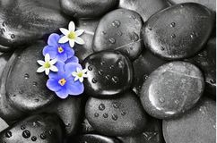 Set of violet and white flowers on pebble Stock Images