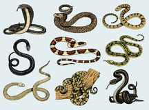 Free Set Viper Snake. Serpent Cobra And Python, Anaconda Or Viper, Royal. Engraved Hand Drawn In Old Sketch, Vintage Style Royalty Free Stock Photo - 105879675