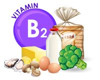 A set of vitamin B2 food. Illustration royalty free illustration