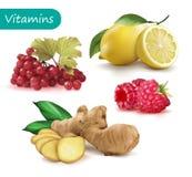 Set of vitamins to strengthen the immunity viburnum, lemon, ginger, raspberry. Vector illustration royalty free illustration
