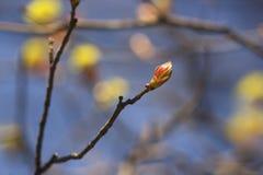 Set von 9 Abbildungen der wundervollen mehrfarbigen Tulpen Stockfotografie