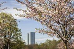 Set von 9 Abbildungen der wundervollen mehrfarbigen Tulpen Lizenzfreie Stockfotografie