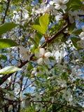 Set von 9 Abbildungen der wundervollen mehrfarbigen Tulpen Stockbild
