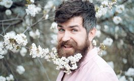 Set von 9 Abbildungen der wundervollen mehrfarbigen Tulpen Glücklicher Mann mit Kirschblüte im Bart Bärtiger Mann mit Schnurrbart Stockbilder