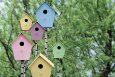 Set von 9 Abbildungen der wundervollen mehrfarbigen Tulpen Multi farbige Vogelhäuser Stockfotografie