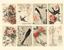 Set von acht Weinlese-Art-Vogel-Marken Stockfotografie