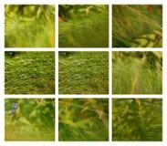 Set von neun Grashintergründen Stockfotos