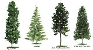 Set von vier Bäumen getrennt gegen reines Weiß lizenzfreie stockfotos