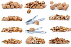 Set of walnuts. Isolated on the white background Stock Photos