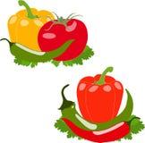 Set warzywa, ilustracja, Fotografia Stock