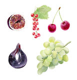 Set of watecolor fruit clipart Royalty Free Stock Image