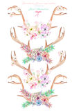 A set with the watercolor antlers, horns entwined by flowers, succulents, leaves and plants. A set with the antlers, horns entwined by flowers, succulents Royalty Free Stock Image