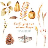 Set of watercolor autumn elements: pumpkins, fir cones, wheat spikes, yellow leaves. Hand painted isolated on a white background Stock Image