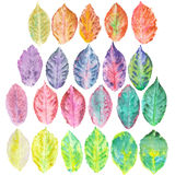 Set with watercolor autumn leaves Stock Photos