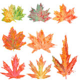 Set with watercolor autumn maple leaves Stock Photography