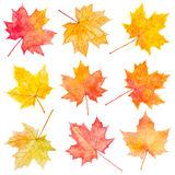 Set of watercolor autumn maple leaves. Royalty Free Stock Photos