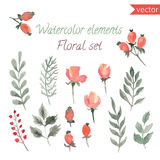 A set of watercolor berries, flowers and leaf. Vector collection with leaves and flowers, hand drawing. Royalty Free Stock Image
