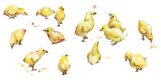 Set of watercolor bird baby chickens Royalty Free Stock Photo