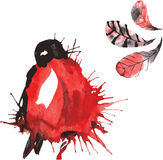 Set - watercolor bird bullfinch, hand-drawn sketch of the techni. Que , and feathers Stock Photography