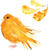 Set - watercolor bird canary, hand-drawn sketch of the technique Royalty Free Stock Photo