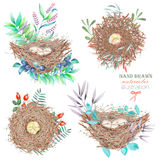 Set of the watercolor bird nests with eggs, hand drawn isolated on a white background Royalty Free Stock Image