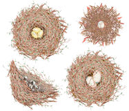 Set of the watercolor bird nests with eggs, hand drawn  on a white background Royalty Free Stock Image
