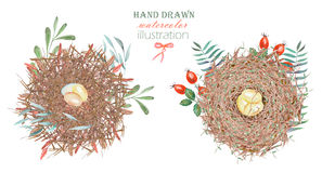 Set of the watercolor bird nests with eggs, hand drawn  on a white background Royalty Free Stock Photography