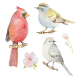 Set of watercolor birds and flowers Royalty Free Stock Photography