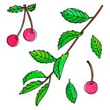 Set of watercolor with black contour cherry berry stock illustration