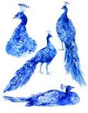 Set of watercolor blue peacocks Stock Photos