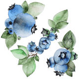 Set of watercolor blueberry. On white background. Can be used for banner, cards, wedding invitations etc vector illustration