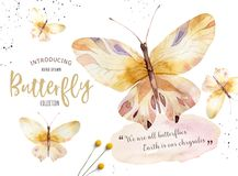 Set of watercolor boho butterfly. Vintage summer isolated spring art. Watercolour illustration. design wedding card. Set of watercolor butterfly. Vintage summer Royalty Free Stock Photography