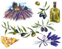 Set of watercolor branches olive oil, lavender Royalty Free Stock Images