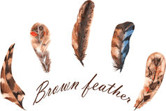 Set of watercolor brown feathers Royalty Free Stock Photo