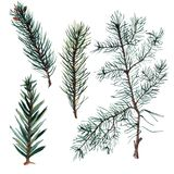 Set of Watercolor Christmas tree branches. Hand painted illustration Stock Photography