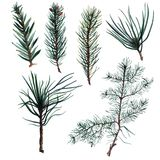 Set of Watercolor Christmas tree branches. Hand painted illustration Stock Image