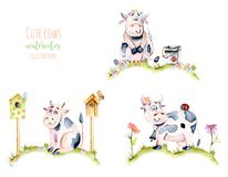 Set of watercolor cute cartoon cows on a meadow, ladybugs and simple flowers illustrations. Hand drawn isolated on a white background Royalty Free Stock Images
