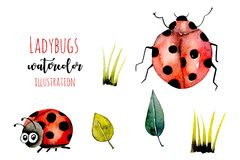 Set of watercolor cute cartoon ladybugs and simple plants illustrations vector illustration