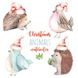 Set of watercolor cute Christmas birds and hedgehogs illustrations Stock Image